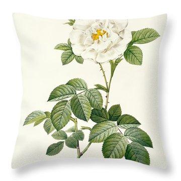 Rosa Alba Flore Pleno Throw Pillow by Pierre Joseph Redoute