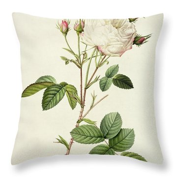 Rosa Centifolia Mutabilis Throw Pillow