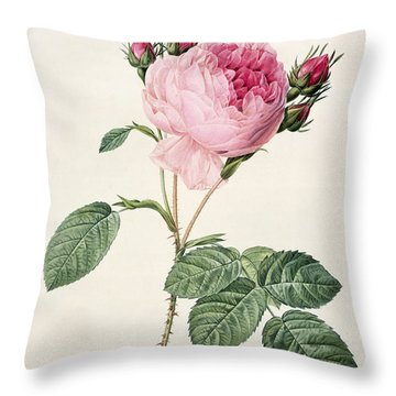 Rosa Centifolia Throw Pillow