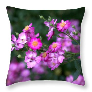 rosa 'Daydream' 1762 Throw Pillow