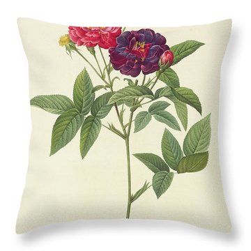 Rosa Gallica Purpurea Velutina Throw Pillow