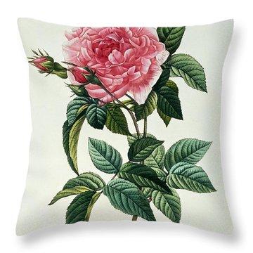 Rosa Gallica Regalis Throw Pillow