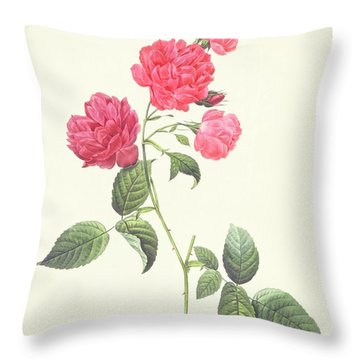 Rosa Indica Caryophyllea Throw Pillow by Pierre Joseph Redoute