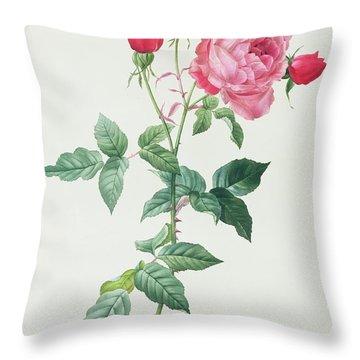 Rosa Indica Throw Pillow