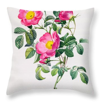 Rosa Lumila Throw Pillow by Pierre Joseph Redoute