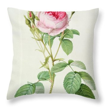 Rosa Muscosa Multiplex Throw Pillow by Pierre Joseph Redoute