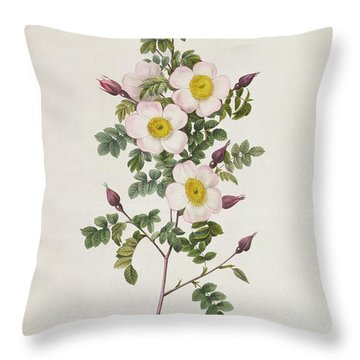 Rosa Pimpinelli Folia Inermis Throw Pillow