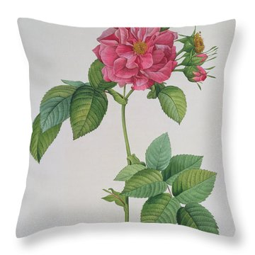 Rosa Turbinata Throw Pillow by Pierre Joseph Redoute