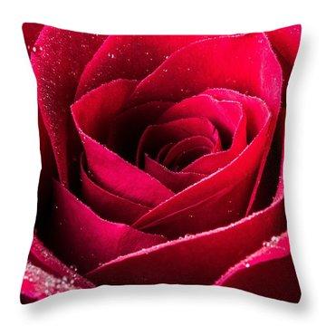 Rose After The Rain Throw Pillow