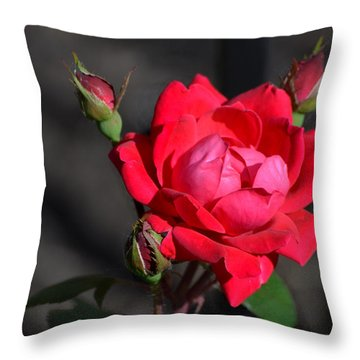 Rose And Shadows Throw Pillow by Kathleen Stephens