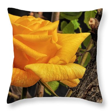 Rose And Thorns Throw Pillow