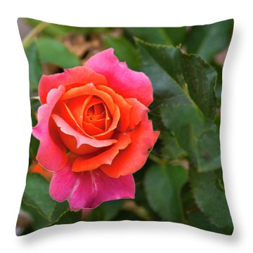 Throw Pillow featuring the photograph Rose by Bill Barber