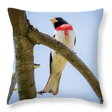 Throw Pillow featuring the photograph Rose-breasted Grosbeak Looking At You by Ricky L Jones