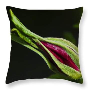 Rose Bud Throw Pillow by Svetlana Sewell