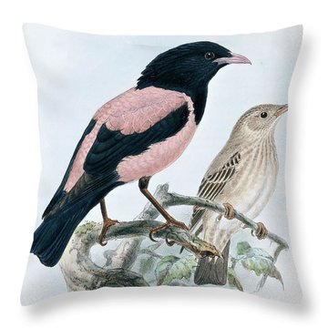 Rose Colored Starling Throw Pillow