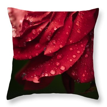 Rose Throw Pillow by Craig Szymanski
