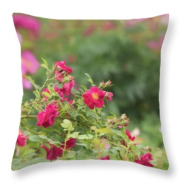 Throw Pillow featuring the photograph Rose Garden Promise by Kim Hojnacki