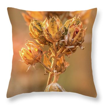 Rose Of Sharon In Winter Throw Pillow