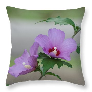 Rose Of Sharon Pair Throw Pillow