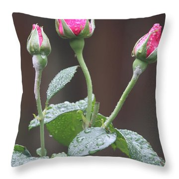 Throw Pillow featuring the photograph Rose Trio by Vadim Levin