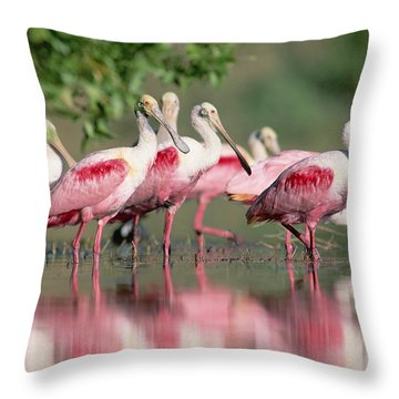 Roseate Spoonbill Flock Wading In Pond Throw Pillow