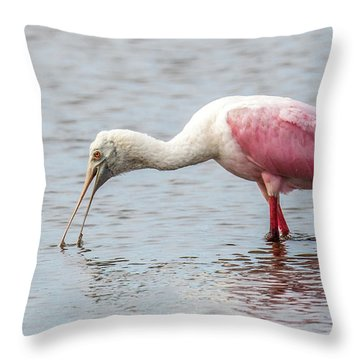 Throw Pillow featuring the photograph Roseate Spoonbill by Paul Freidlund