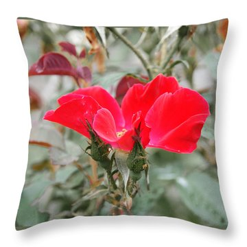 Rosebuds N Red Rose Throw Pillow