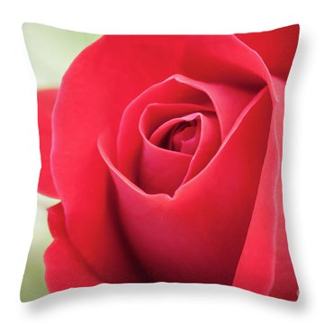 Throw Pillow featuring the photograph Roses Are Red by Todd Blanchard