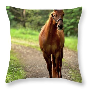 Rosey On The Road Throw Pillow