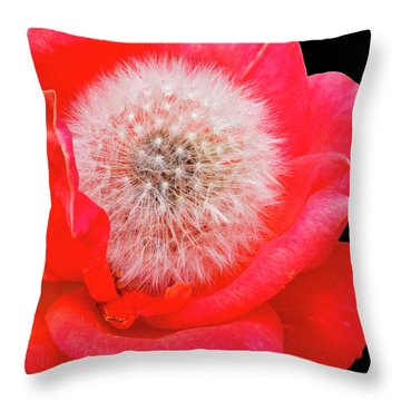 Rosie And Dan Throw Pillow by Stephen Anderson