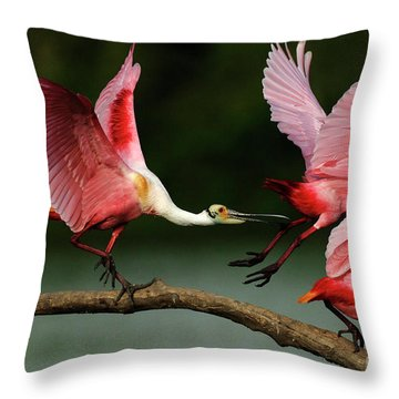 Rosiette Spoonbills Lord Of The Branch Throw Pillow by Bob Christopher