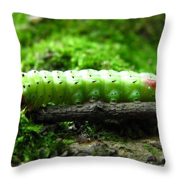 Rosy Maple Moth Caterpillar Throw Pillow