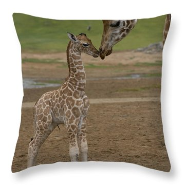 Rothschild Giraffe Giraffa Throw Pillow by San Diego Zoo