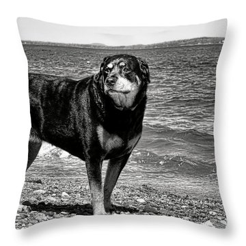 Rottweiler At The Shore Throw Pillow by Olivier Le Queinec