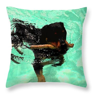 Rottweiler Dog Swimming Throw Pillow by Sally Weigand