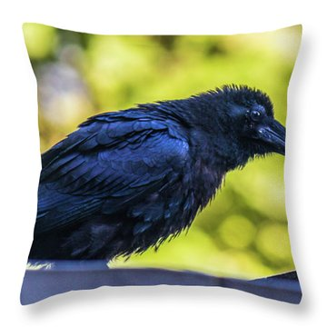 Throw Pillow featuring the photograph Rough Crow  by Jonny D