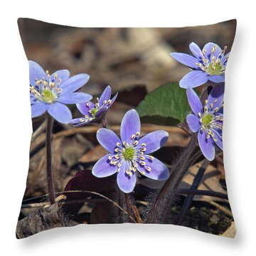 Round-lobed Hepatica Dspf116 Throw Pillow