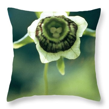 Roundleaf Asiabell Throw Pillow by American School