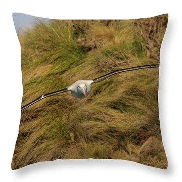 Royal Albatross 2 Throw Pillow by Werner Padarin