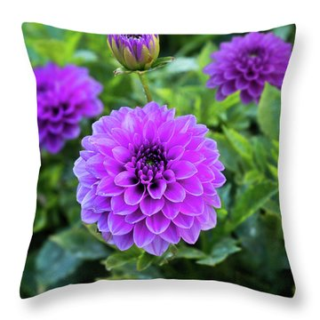 Royal Dahlia Delight Throw Pillow