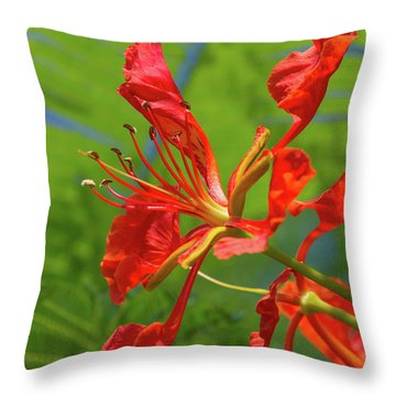 Royal Poinciana Flower Throw Pillow