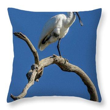 Royal Spoonbill 01 Throw Pillow