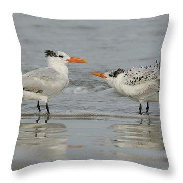 Royal Tern Adult And Juvenile Throw Pillow