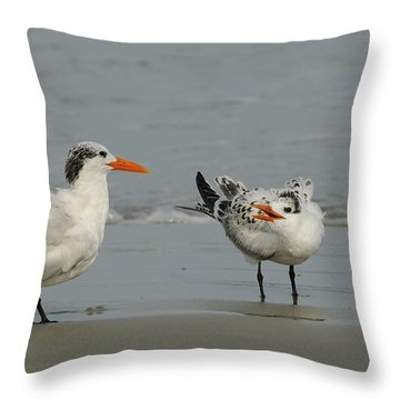Royal Tern Adult And Young Bird Throw Pillow