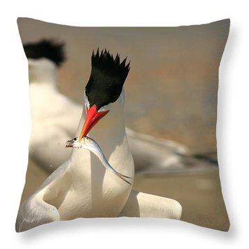 Royal Tern Catch Throw Pillow