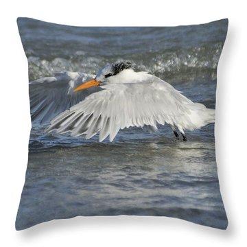 Royal Tern Taking Flight Throw Pillow
