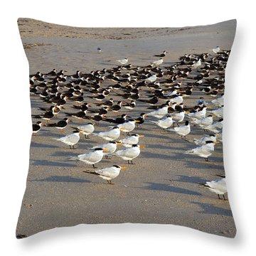 Royal Terns At Sebastian Inlet In Florida Throw Pillow by Allan  Hughes