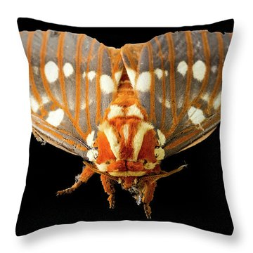Royal Walnut Moth On Black Throw Pillow