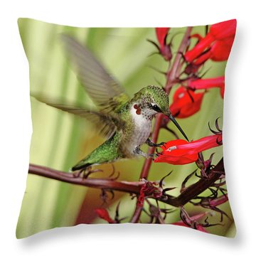 Ruby And Scarlet Throw Pillow by Debbie Oppermann