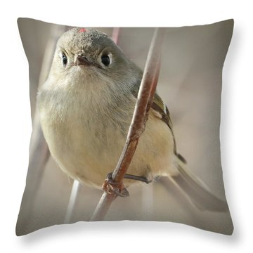 Ruby-crowned Cuteness Throw Pillow